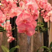 orchidee-zoe-felix-laetitia-devillars