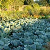 legumes hiver