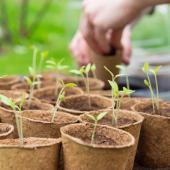 calendrier semis récolte potager