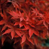 arbre colore