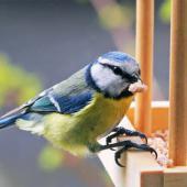 oiseau hiver