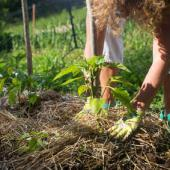 permaculture engrais compost