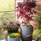 plante balcon automne