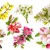 arbuste floraison printemps