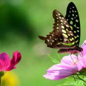 attirer papillon jardin