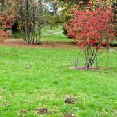 Automne gazon pelouse renovation