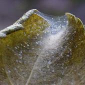Araignee rouge traitement plante
