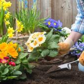 jardinage avril printemps