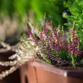 plantes pour Jardiniere hiver