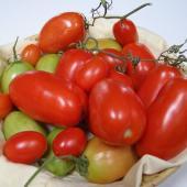 tomate roma culture conseils