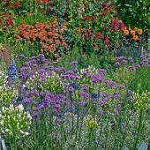 Plantes pour plein soleil