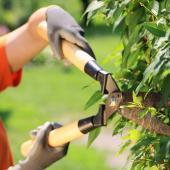 quand comment tailler arbuste