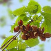 arbre fruit decoratif