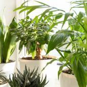 plante interieur qui aime plein soleil