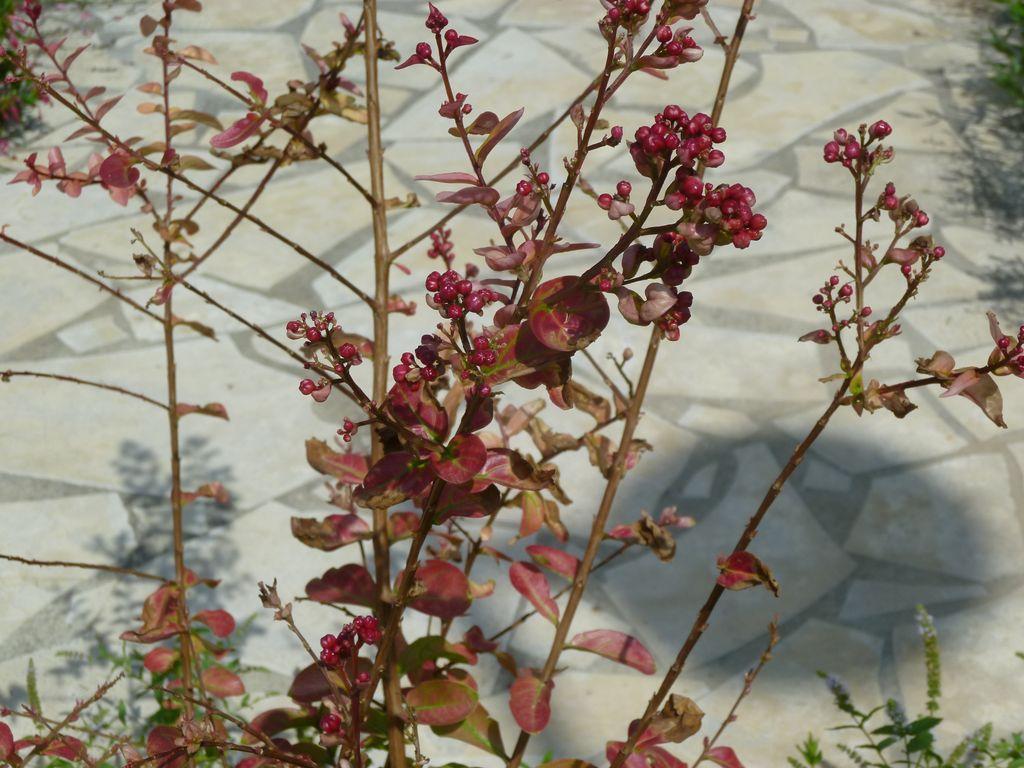 feuilles  roses