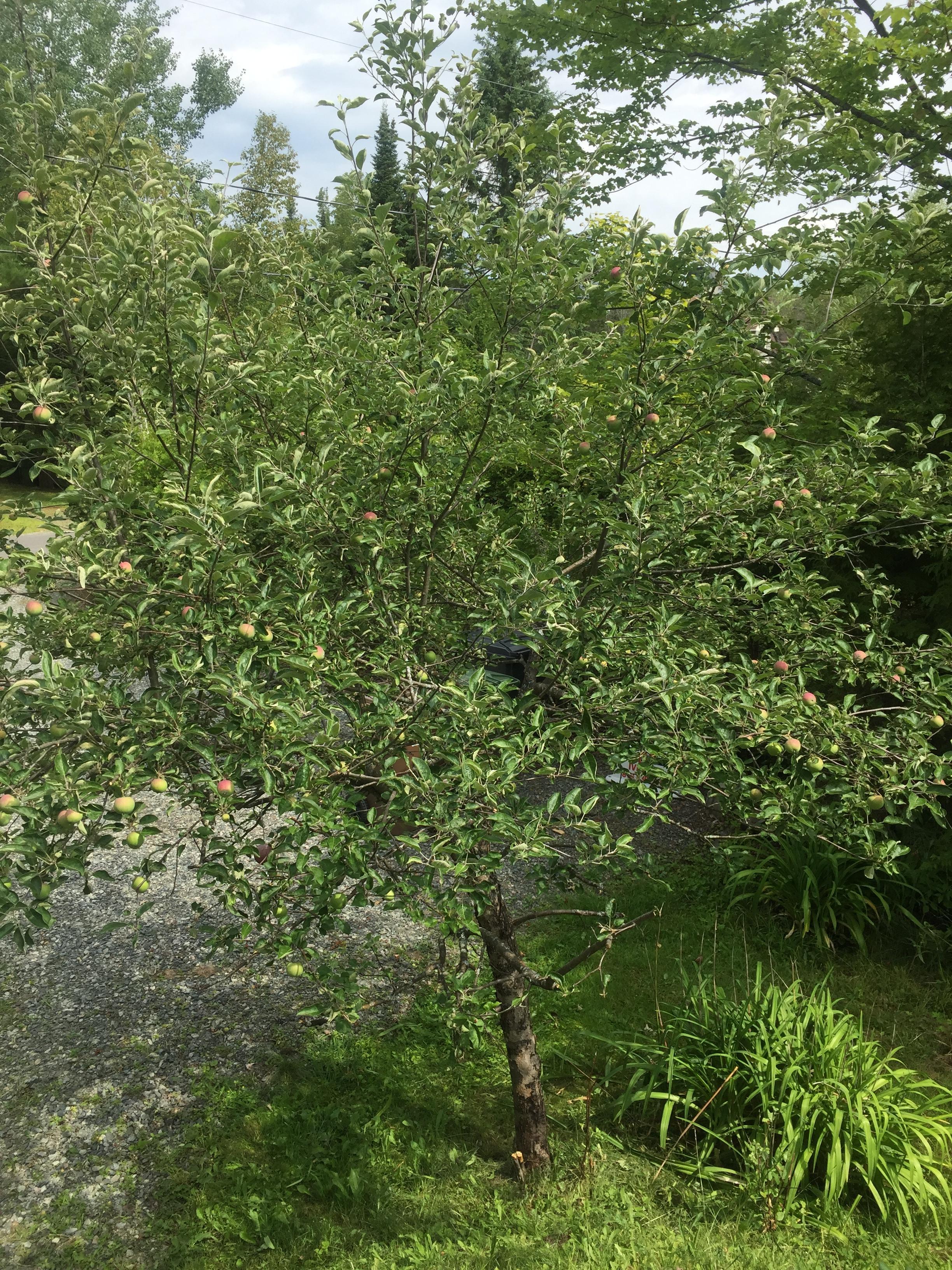 https://forum.jardiner-malin.fr/wp-content/uploads/sites/2/hm_bbpui/145951/ibel13na9zq0rajck6orvn4ux9p6wtwp.jpeg