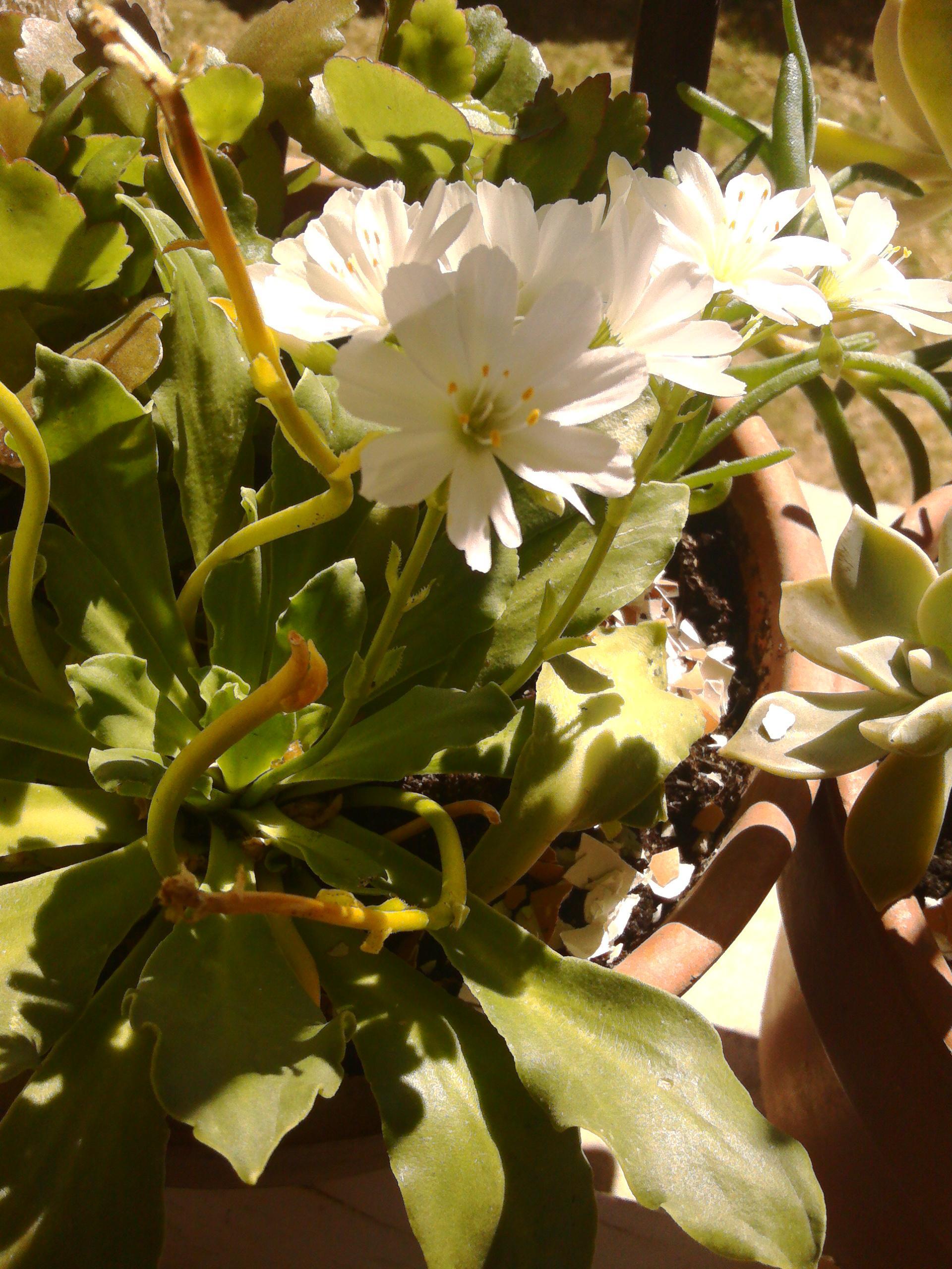 https://forum.jardiner-malin.fr/wp-content/uploads/sites/2/hm_bbpui/152001/dgn1kga58yijoidq6van2yzvchz0e5m2.jpg